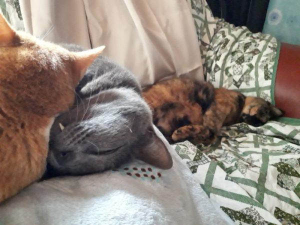 猫たちの昼寝の風景