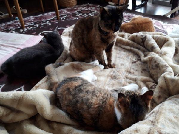 4匹の猫と連休ゴロゴロ