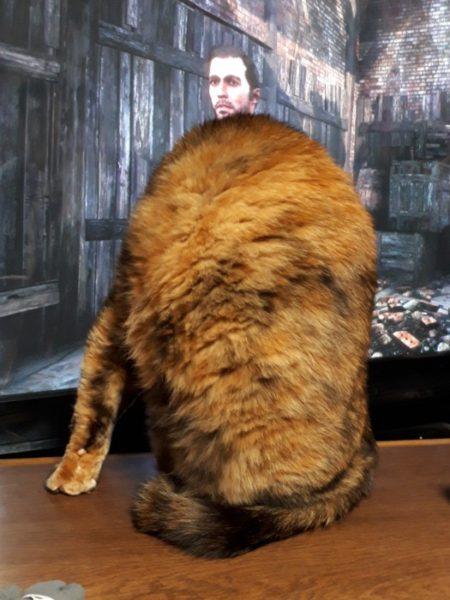 ゲームのキャラと合わさってクリーチャーと化したサビ猫しめじ