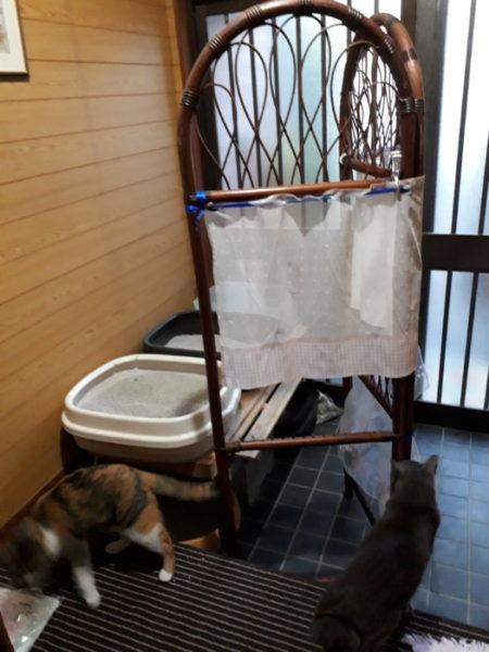 猫トイレを、ヒトにも猫にも快適に改良【2段式にして省スペース化】