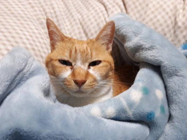 プラチナ乳酸菌で、サビ猫しめじの軟便が止まった
