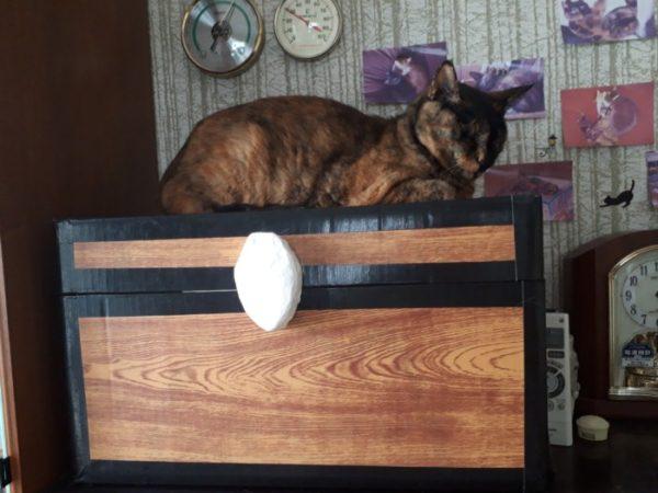 通年でしっかり、且つ低コストの猫のノミ・マダニ対策を考えてみた