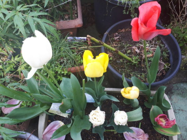 春のカオスなお庭は花盛り。