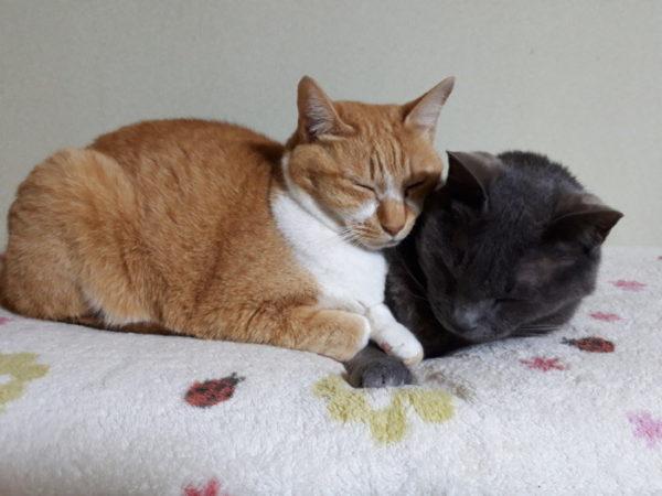 カオスなお庭に飾る、猫の看板をDIY【古看板をリメイク】