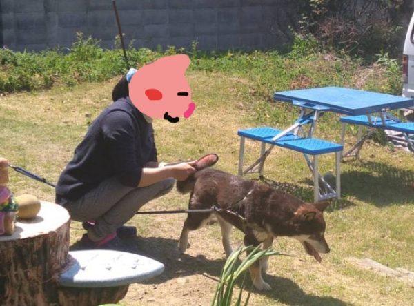 レンタル犬を楽しむ人の気持ちがちょっとわかる
