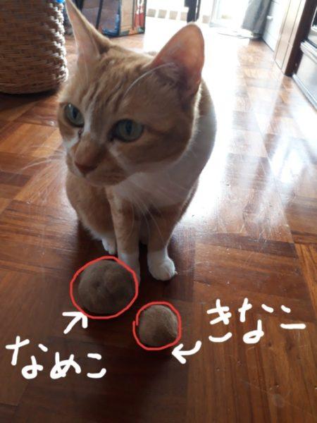 きなことなめこ。【ファーミネーターで猫のブラッシング】