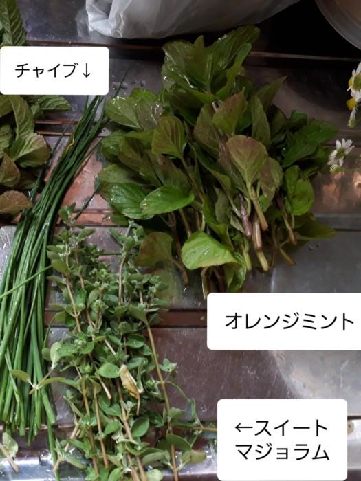 家庭菜園のハーブをお茶に【チャイブ&スイートマジョラム&マジョラムシリアカ】