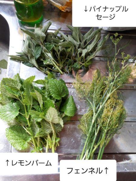 家庭菜園のハーブをお茶に【フェンネル&ローズマリー&ビワ】