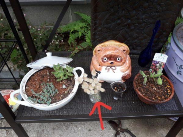 多肉植物にハマって増やして飾り立ててみた