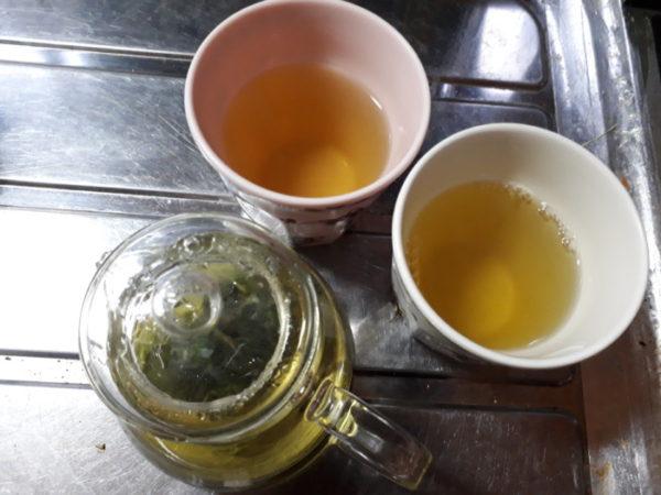家庭菜園のハーブ&薬草をお茶に【レモンバームとヒュウガトウキ】