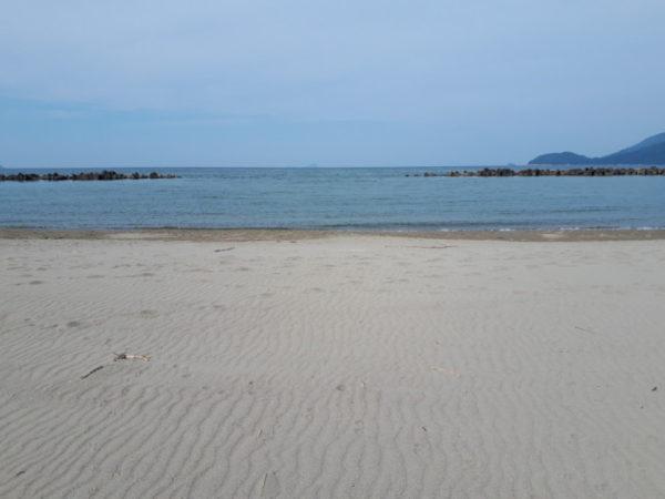 引き続き…控えめな外出してきました【砂浜で流木拾いと恐竜・丹波竜を感じる旅】