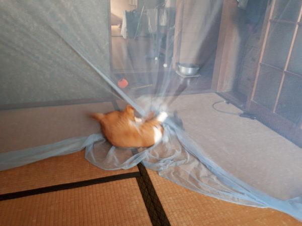 更に…コロナの給付金で買ったもの【蚊帳と、人猫のお口の健康にサンクロン】