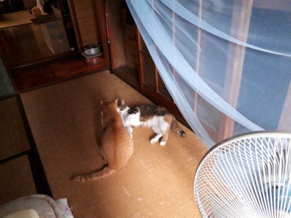 末妹ねこをこらしめる長女猫を観察