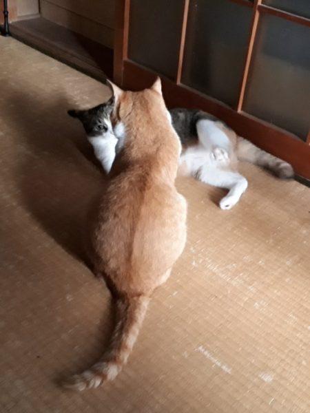 末妹猫をこらしめる長女猫を観察