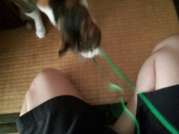 家に迷いこんできた三毛猫子猫を保護して7ヶ月 イヤホンかじる