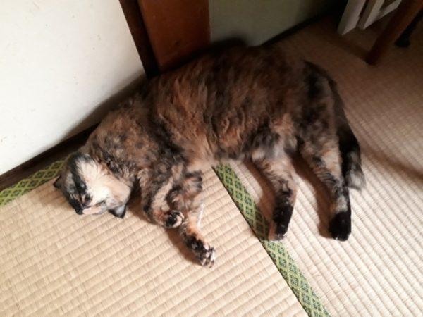 旦那の最近の日曜大工( ・∀・)その2【床下収納を、猫に涼しいスペースに】