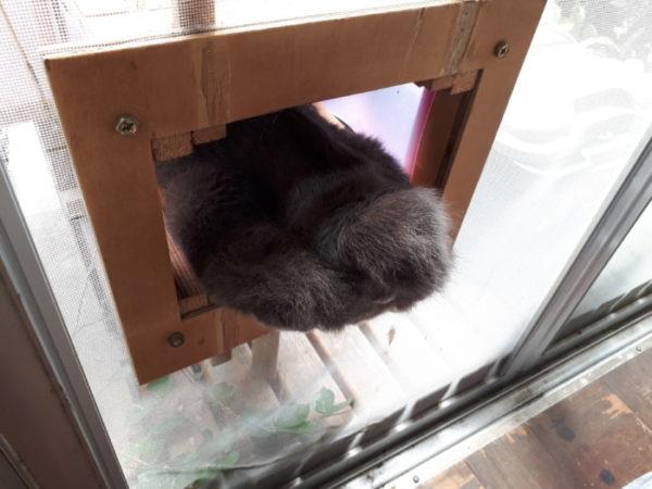 とてつもなく神経質な灰色猫ししゃもに、楽に薬を飲んでもらう方法発見