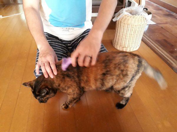 お盆を過ぎると、扇風機に毛が生えてくる【猫あるある】