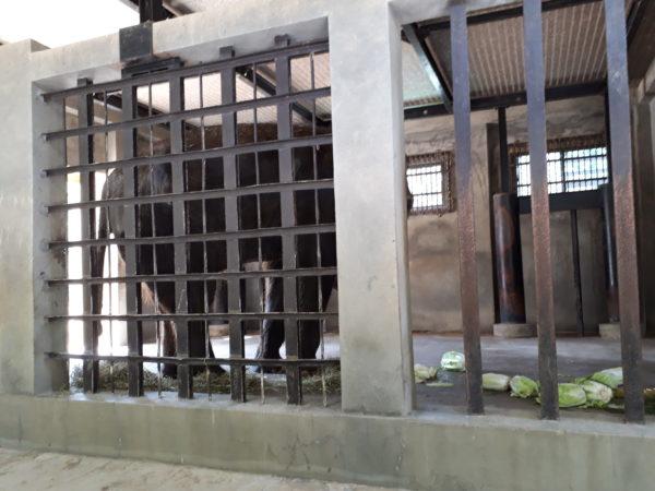 動物園の象さんを見て悲しくなった話。【姫路市立動物園のアジア象の姫子さん】