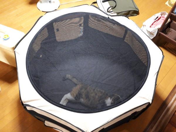 災害に備えて買ったもの【多頭猫との避難に備えて】折りたたみコンパクトペットサークル