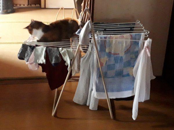 夏の暑さ対策の為の空間が、縞三毛猫なめこのいりこ部屋になった