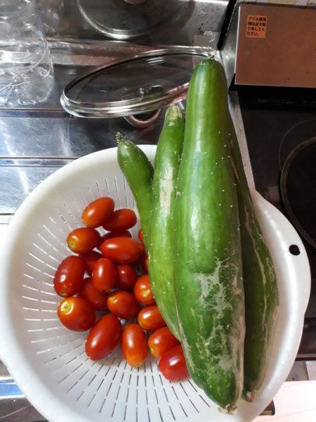 今年もネギ属の植え付け。【巨大プランターで家庭菜園】キュウリ