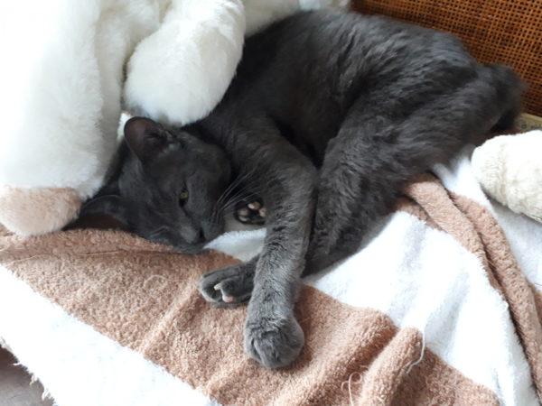 全臼歯抜歯をした灰色猫ししゃものその後。