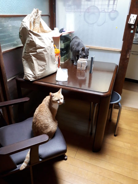 """猫のドライフードの吐き戻し(嘔吐)軽減&ダイエットに""""知育箱(知育菓子タッパー)""""が良さげ"""