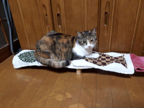 食卓に乗ってeat meな縞三毛猫なめこ