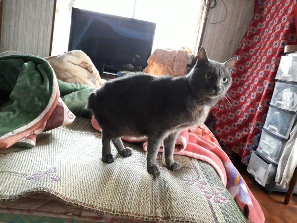 車の見分けがつかないので、猫ステッカーを自作してみる。(その2)