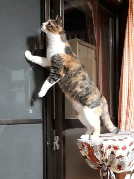猫のいるお家にやってくる、猫な物たち