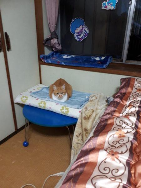 冬支度その1~寝床の移動と板間にカーペット~黄色猫きなこの古民家暮らし