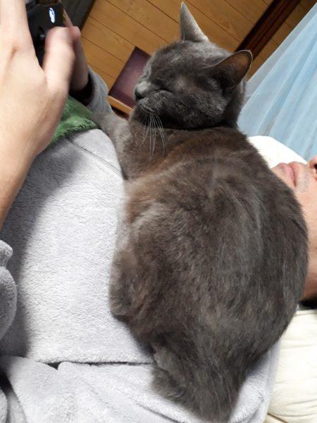 寒くなって父ちゃんに寄り添う灰色猫ししゃも