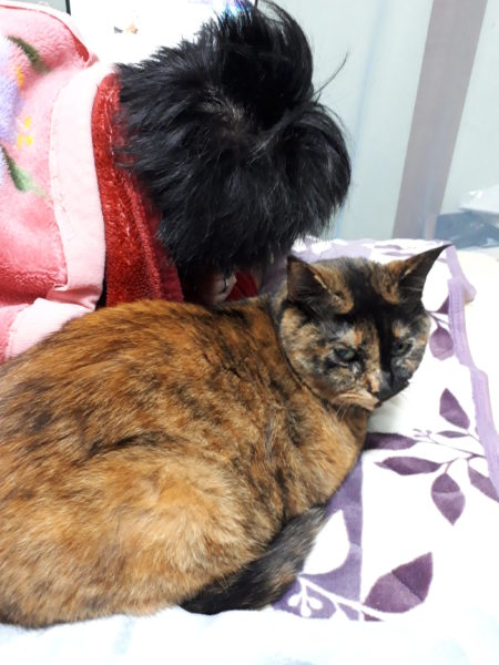 冬支度その1~寝床の移動と板間にカーペット~サビ猫しめじ