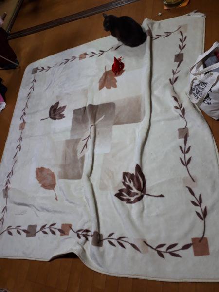 冬支度・その1~寝床の移動と板間にカーペット~古民家暮らし