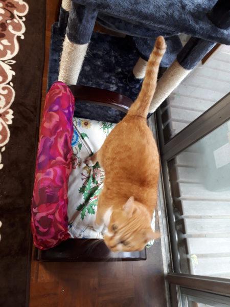 縞三毛猫なめこが爪とぎするから、座椅子がボロボロ、修復