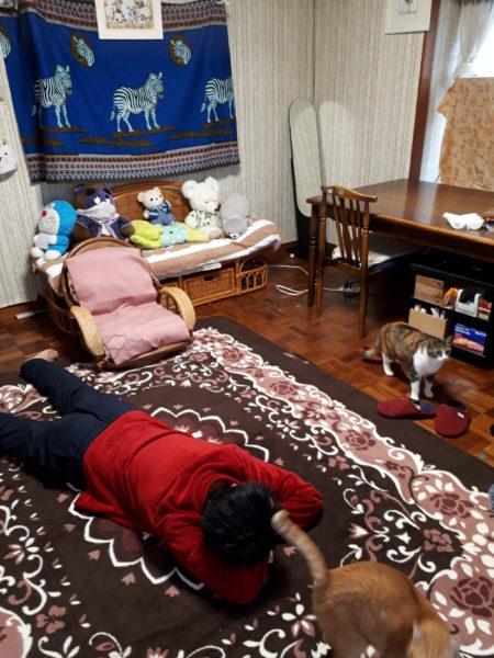 冬支度その1~寝床の移動と板間にカーペット~猫と古民家暮らし