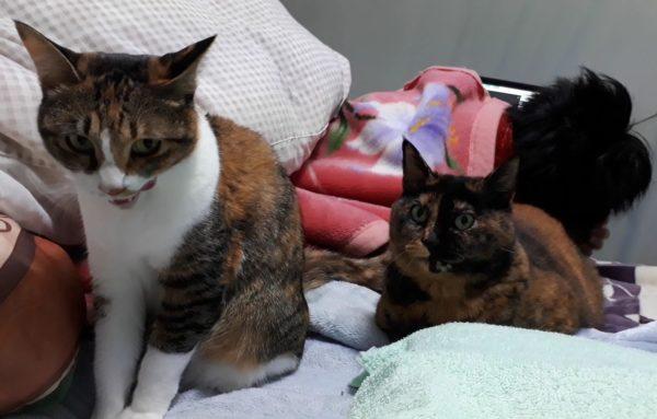 冬支度その1~寝床の移動と板間にカーペット~古民家暮らし、サビ猫しめじと縞三毛猫なめこ