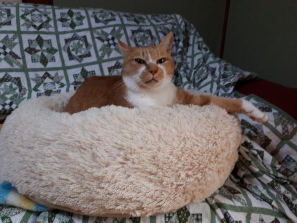黄色のビーズクッション+黄色猫きなこ=カレーライス