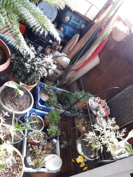 冬支度~多肉植物・サボテン・バラなどを野外から工場(こうば)に移動~