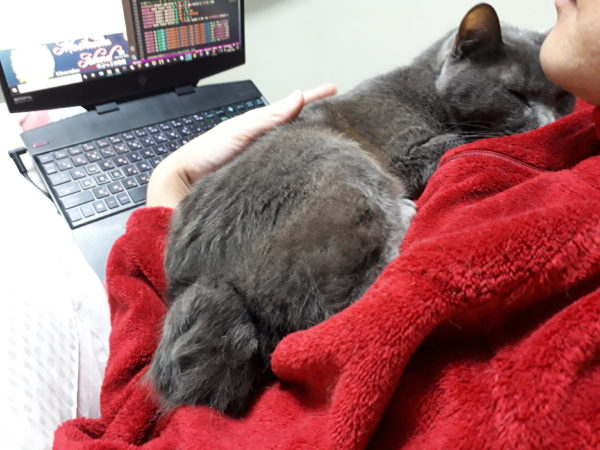 全臼歯抜歯手術後、半年経っても痛みが続くので、灰色猫ししゃもを別の動物病院に連れてってセカンド・オピニオンしてもらったら。