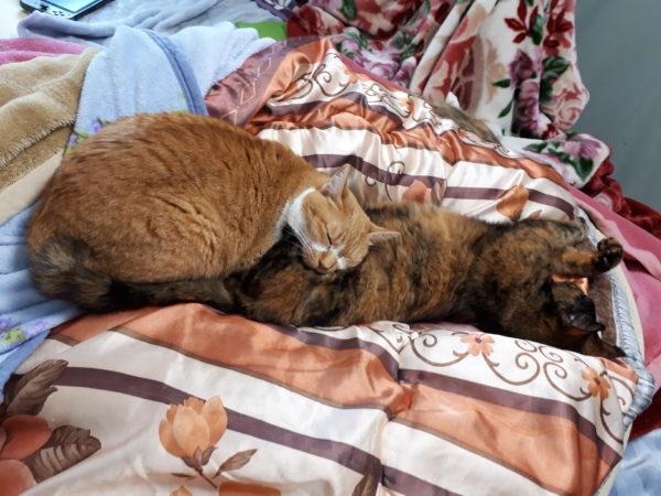 冬が来て、スライムのようにくっつきだす猫型の毛玉たち、黄色猫きなことサビ猫しめじ