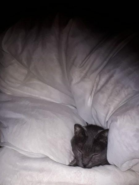 冬が来て、スライムのようにくっつきだす猫型の毛玉たち、押し入れの布団にくるまるドラえもんみたいな灰色猫ししゃも