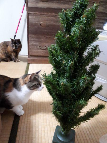 猫に邪魔されつつ、クリスマスツリーなどを飾り付け