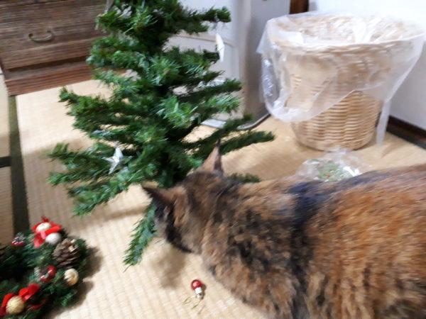 クリスマスツリーの飾り付けを邪魔してくるサビ猫しめじ