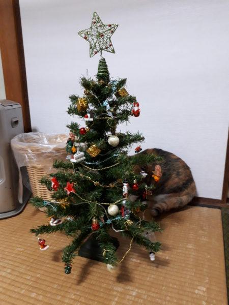 クリスマスツリーの裏に隠れて何か企んでる縞三毛猫なめこ。