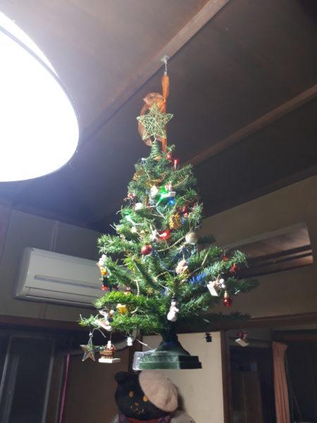 猫に襲われないように、天井から吊るしたクリスマスツリー