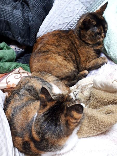 アメリのクレームブリュレを作ってみた。ぷっことししゃもの猫のいる田舎暮らしブログ
