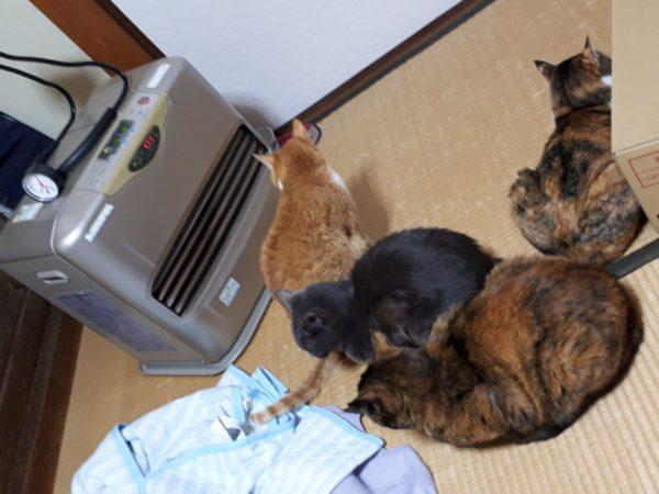 ファンヒーターで暖まる猫4匹