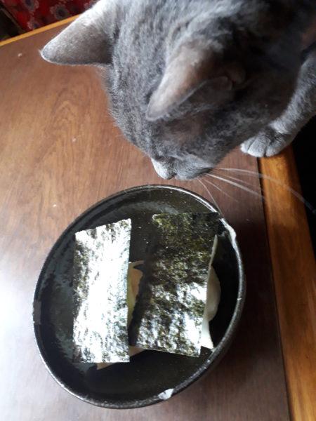 古民家でだるまストーブ点けて餅を焼いてみた+灰色猫ししゃも